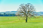 picture of snow capped mountains  - The Swiss Countryside in the outskirts of Bern Switzerland - JPG