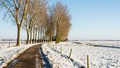 pic of row trees  - Row of tall bare trees beside a curved country road and a field with snow on a sunny day in winter - JPG