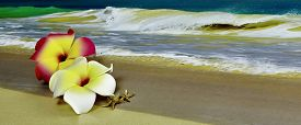 stock photo of starfish  - A pink and white Plumeria Hawaiian Flower with starfish laying on sand with waves in background and shallow depth of field - JPG