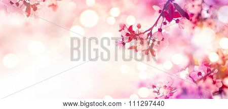 Spring border or background art with pink blossom. Beautiful nature scene with blooming tree and sun