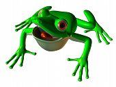 Goofy Tree Frog
