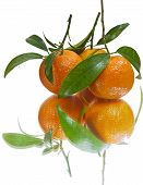 Juicy tangerines (isolated)