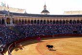 Sevilla Bullfight