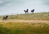 Four Running Horses