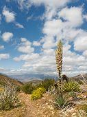Desert Scenery In Anza-borrego Desert State Park