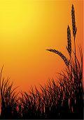 Centeno silueta fondo - Sunset