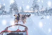 Riding husky sledge in Lapland landscape poster