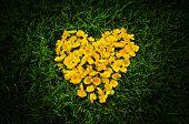 Heart Of Yellow Flowers