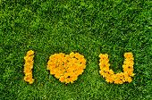 Inscription I Love You By Dandelions On A Grass