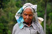 Retrato de selecionador de chá tâmil