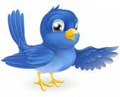 Bluebird apontando