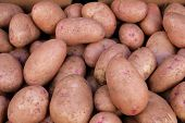 Showcase With Potatoes On The Street Market. Close-up. Vegetables Of The Store. Spontaneous Market I poster