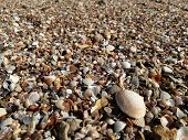 Small Shells On The Beach Small Shells On The Beach poster