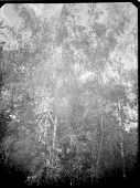 A Real, Black And White Large-format Spoiled Photo With Dust And Scratches. Glass Photographic Plate poster