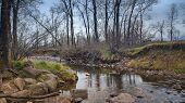 A Quiet Walk On The South Boulder Creek Trail In Colorado. Peaceful, Rainy, Quiet Day. Earth Tones,  poster