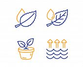 Mint Leaves, Leaves And Leaf Dew Icons Simple Set. Evaporation Sign. Mentha Herbal, Grow Plant, Wate poster