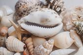 Seashell Background With Starfish. Many Different Colorful Seashells And Starfish Piled Together. Oc poster
