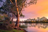 Murray River in South Australia poster