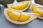 Malaysia famous fruits durian musang king, sweet golden creamy flesh. poster