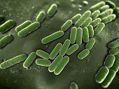 Cerca de las bacterias
