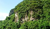 Limestone Mountain Cliff Overgrown with Trees