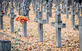 picture of polonia  - Grave crosses on old Powazki Military Cemetery in Warsaw Poland - JPG