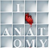 image of cynicism  - I love anatomy  - JPG