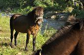 Horse Grass Field Brown Stand
