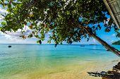 Árbol sobre el mar Caribe