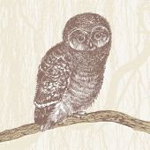 cute owl, hand drawing, vector illustration