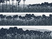 Horizontal Banners Of Winter Coniferous Pinewood.