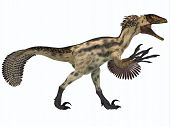 Deinonychus On White
