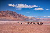 Salar Aguas Calientes, desert Atacama, Chile