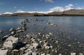 picture of mckenzie  - Lake Tekapo  - JPG