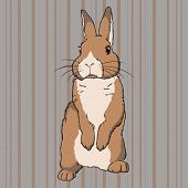 foto of cony  - Vector illustration of fluffy brown  standing rabbit on striped background - JPG