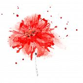 Red flower with space for your own text. Watercolor painting