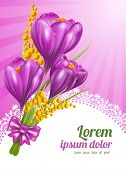 Crocuses. Beautiful spring flowers. Vector illustration.