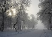 The Christmas mysterious winter snowy park in a fog