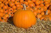 Medium Pumpkin On Hay