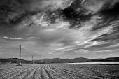 picture of farm land  - Field in black and white - JPG