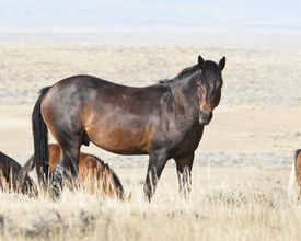 image of open grazing area  - free roaming mustangs on the McCullough Peak Wild Horse Management Area in Wyoming - JPG