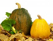 Large and small pumpkins on a white background