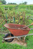 Old wheel barrel and gardening tools