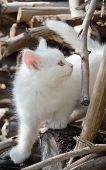 white cat on top of a wood pile in late evening