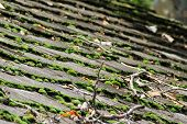 Wooden shingles with moss on top