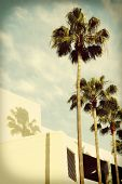 Palm Trees with shadows on building, retro instagram look and vignetting.