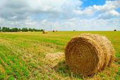 Harvested Field with Round Straw Bales and Blue Sky with Low Clouds