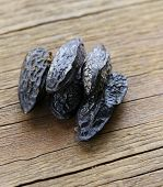 fragrant tonka bean, vanilla flavor used for baking