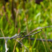 picture of stick-bugs  - Dragonfly that is on a stick with tall grass behind