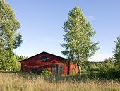 Wooden barn, trees in evening lit.
